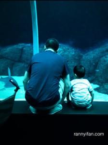 Bapak & Anak.. sama sama liatin ikan Hiu